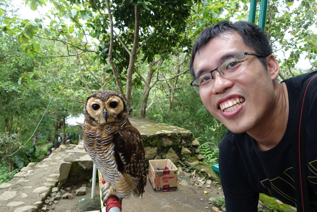 Kalibiru Nationa Park Animal Owl